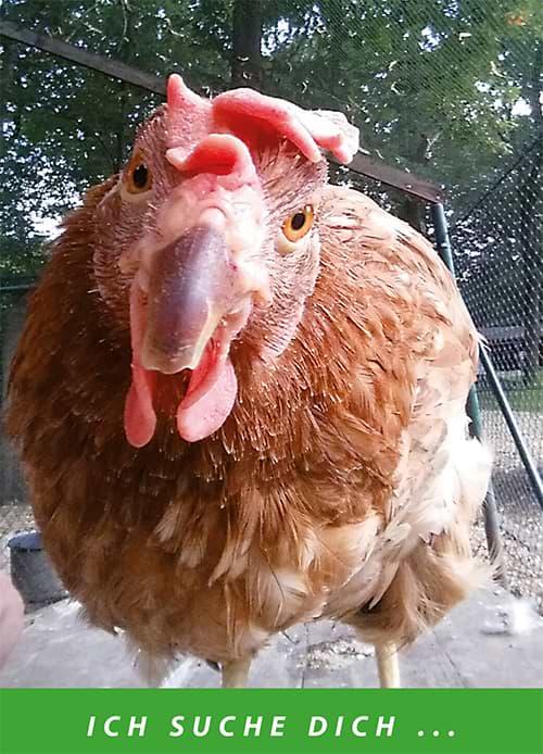 Hühnerrettung helfen - Adoption Huhn