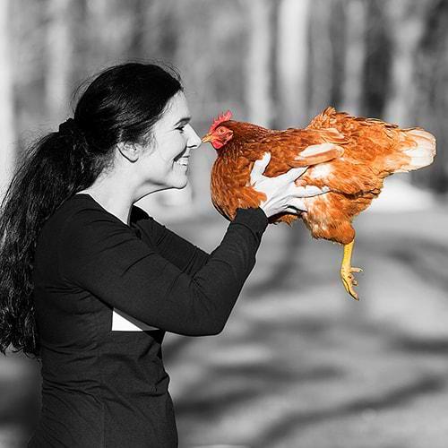 Hühnerrettung NRW - Abbildung Nicole Urbantat
